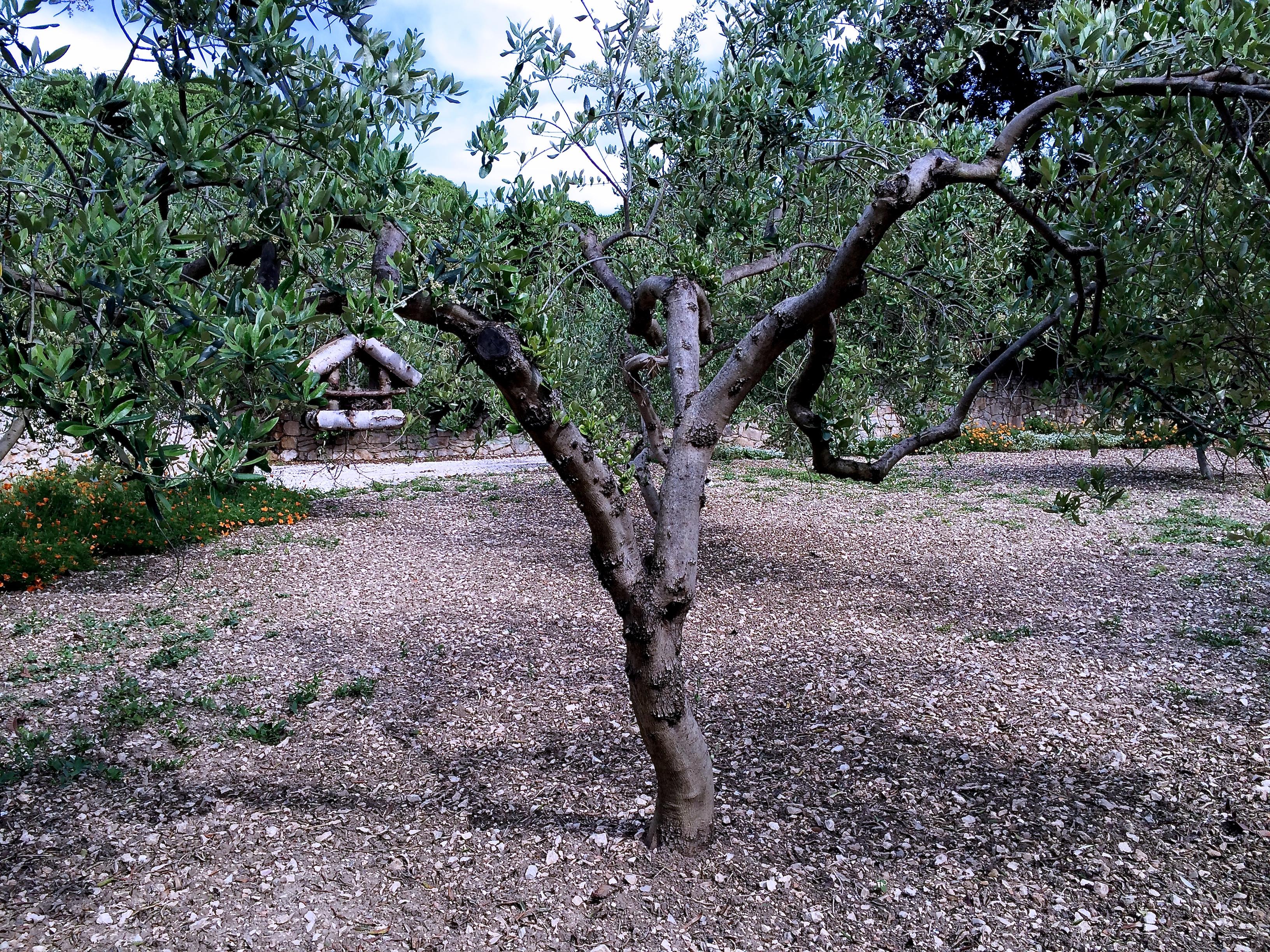 Tamed garden in Hvar