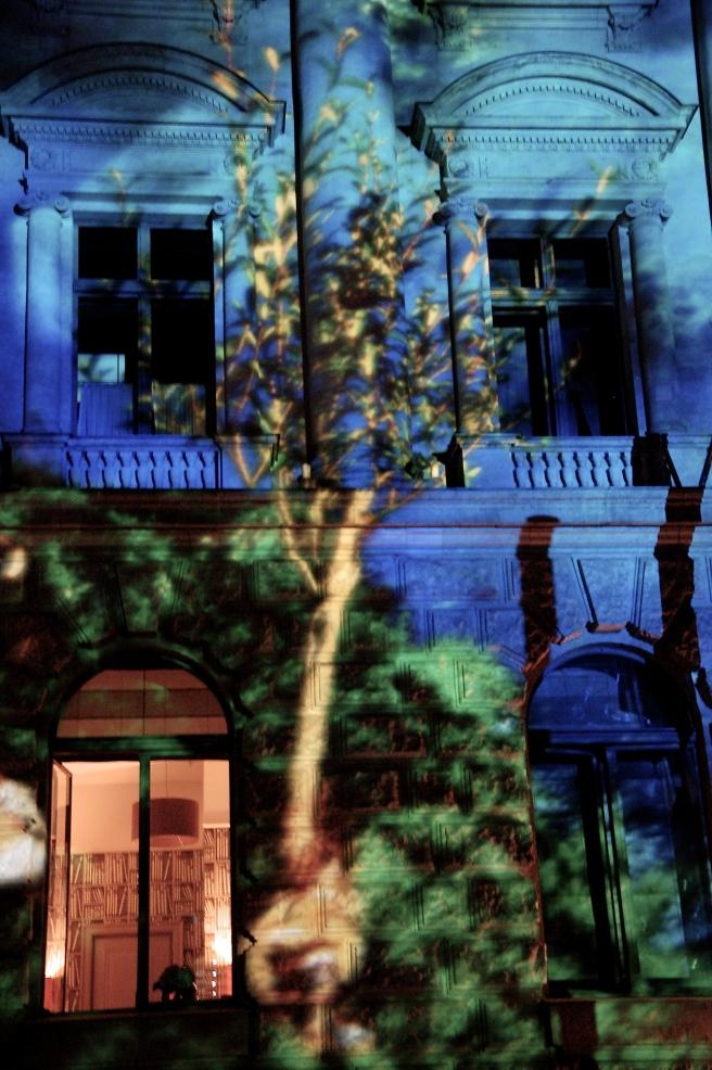 A tree grows in Berlin
